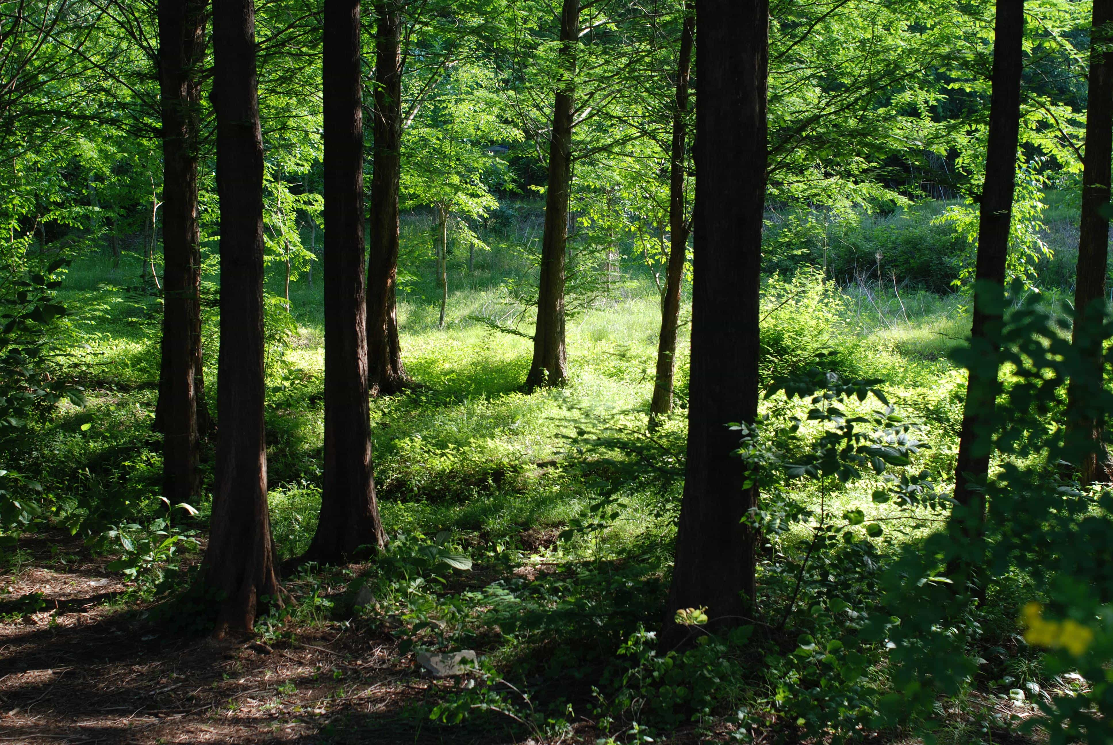 A green, shadowed forest, sunlit from the right.