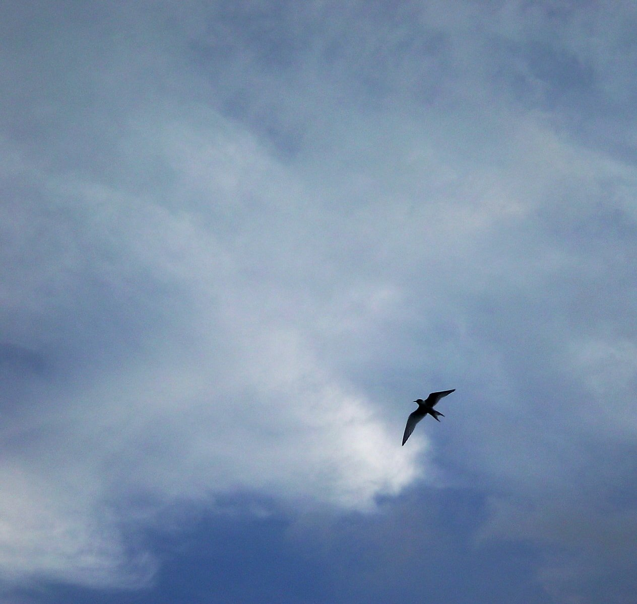 """Why Birds Have Wings"": Prose Poem about Rape"