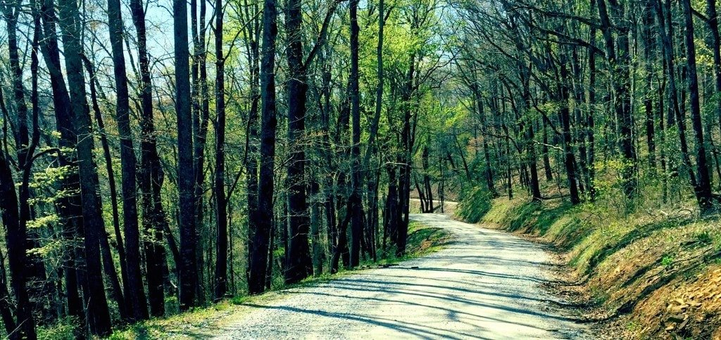 A photograph of a long winding gravel trail in a mountain forest