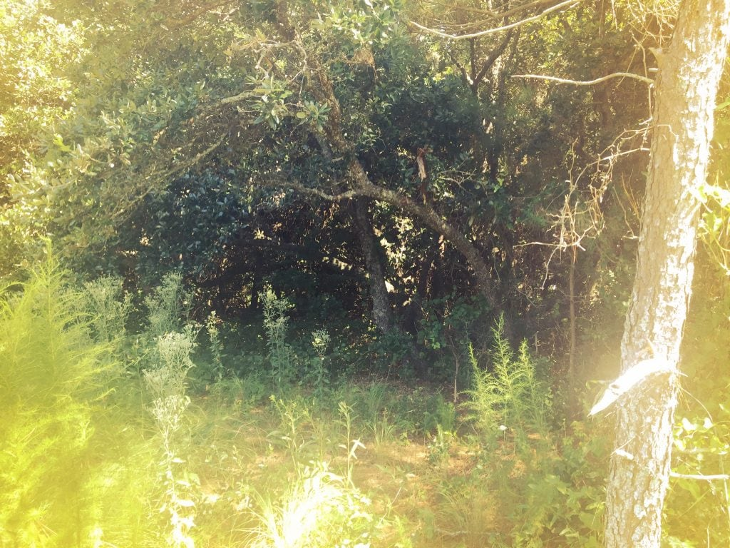 Seaside Forest 2